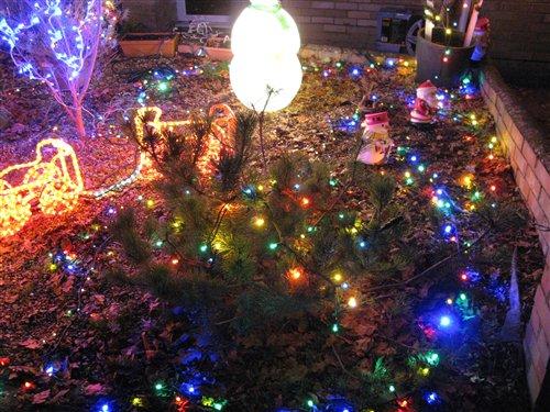 - Christmas-Lights-on-Small-Garden-_2800_5_2900_